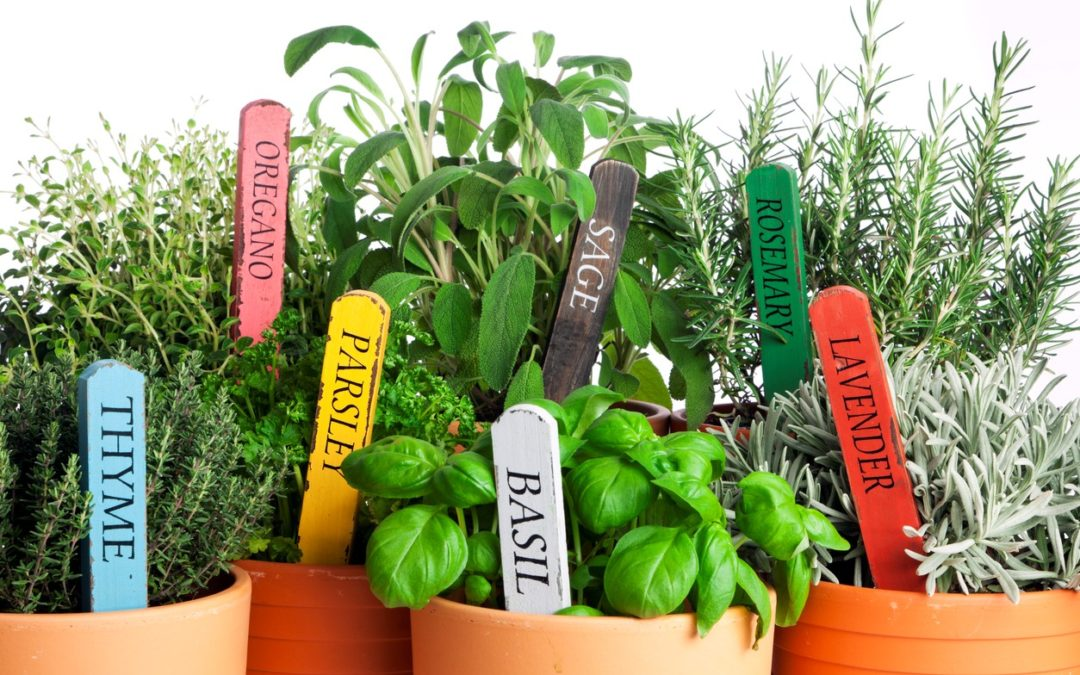 Amp Up Your Cooking with Herbs