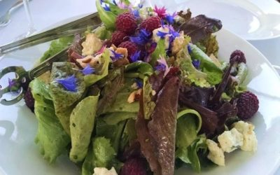 Light and Savory – Mixed Greens Salad with Edible Flowers
