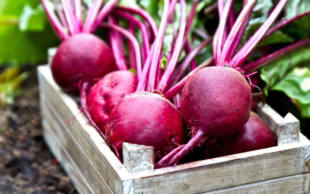 "Beets – A Super ""Super Food""!"