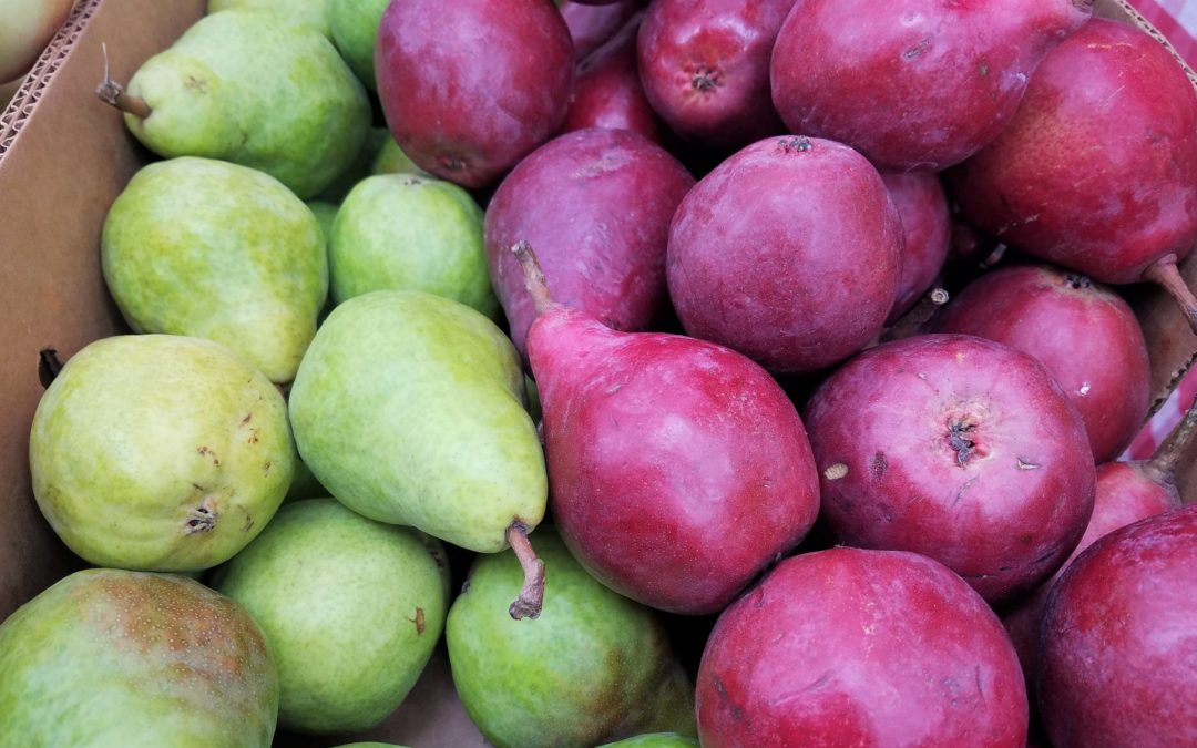 PEARS: THE OTHER FALL FRUIT