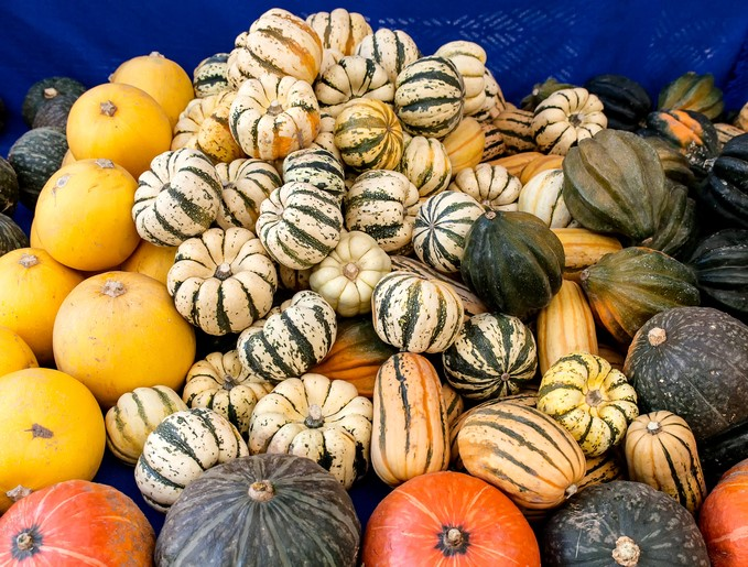 WONDERFUL WINTER SQUASH
