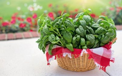 For the Love of Basil
